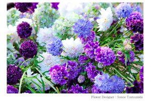 松岡伸一が撮影した紫を基調とした花の写真