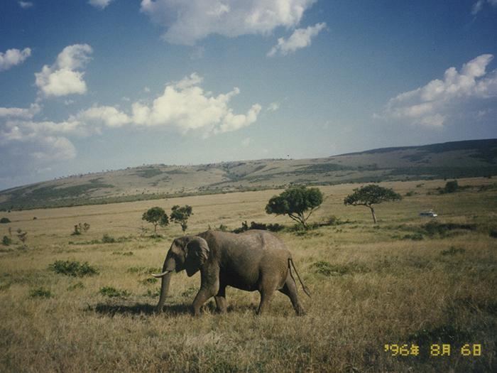 堤田和久さんがアフリカで撮影したゾウの写真