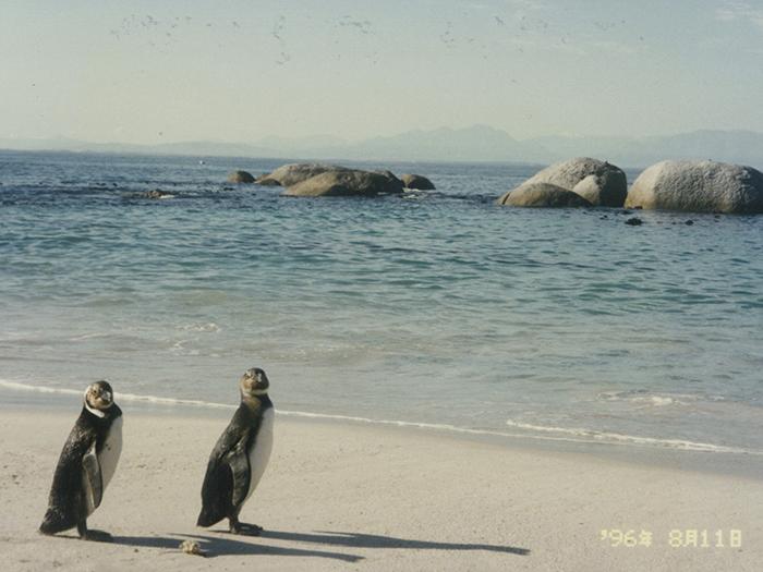 堤田和久さんがアフリカで撮影したペンギンの写真
