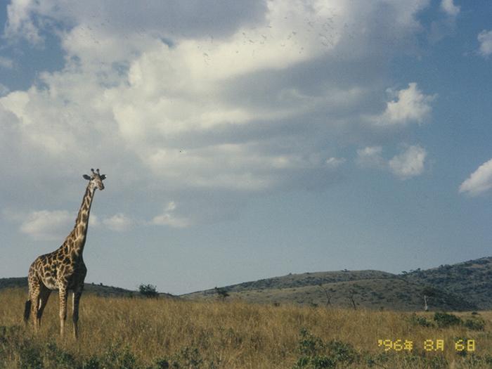 堤田和久さんがアフリカで撮影したキリンの写真