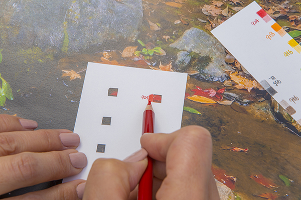 色鉛筆で混色する写真